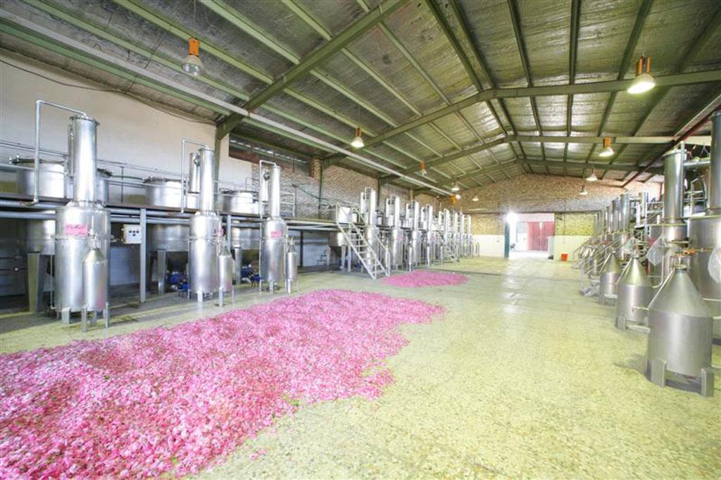 distillation hall (1)